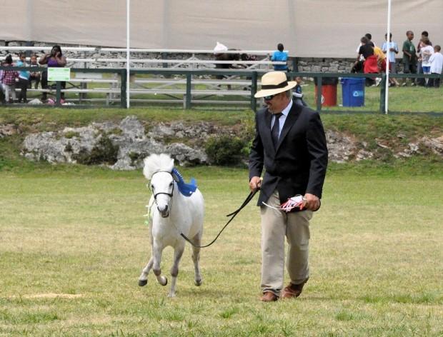 ag show equestrian 2011 bermuda (5)