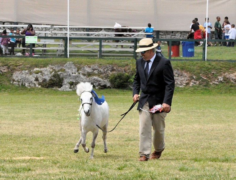ag-show-equestrian-2011-bermuda-5