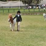 ag show equestrian 2011 bermuda (6)