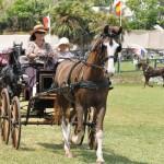 ag show equestrian 2011 bermuda (9)