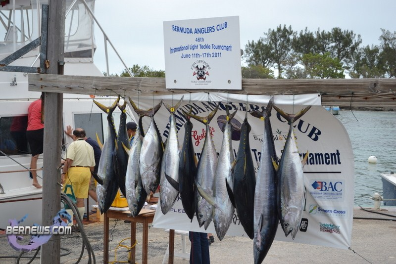 Bermuda fishing tournament june 2011 1 bernews for Fishing in bermuda