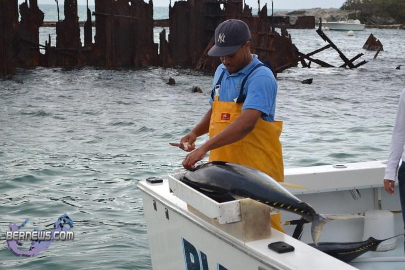 Bermuda fishing tournament june 2011 14 bernews for Fishing in bermuda