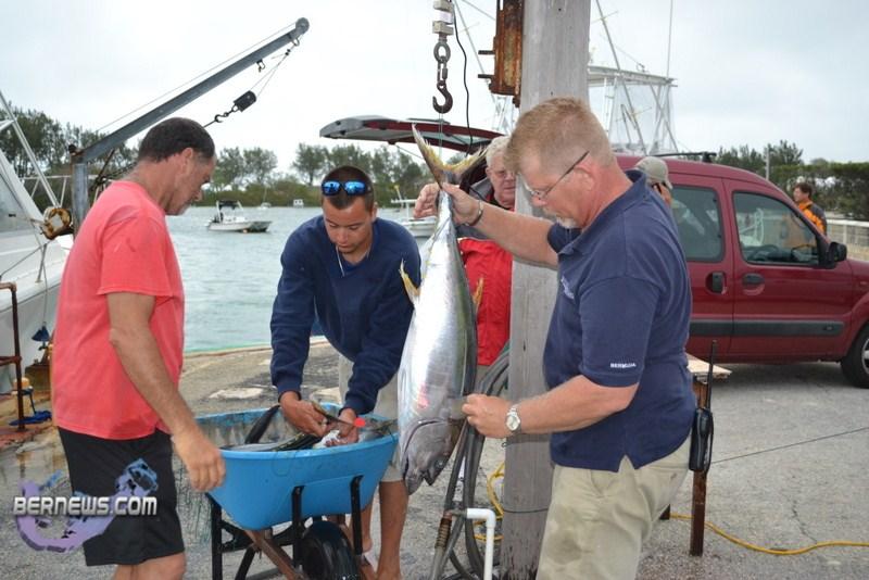 Bermuda fishing tournament june 2011 5 bernews for Fishing in bermuda