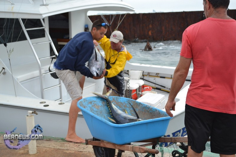 Bermuda fishing tournament june 2011 6 bernews for Fishing in bermuda