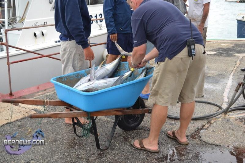 Bermuda fishing tournament june 2011 9 bernews for Fishing in bermuda