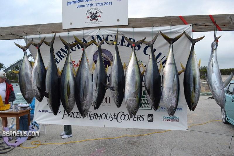 Iltt bermuda fishing june 15 11 13 bernews for Fishing in bermuda