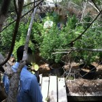 kitchener close cannabis weed police Bermuda July 20 2011 - 10