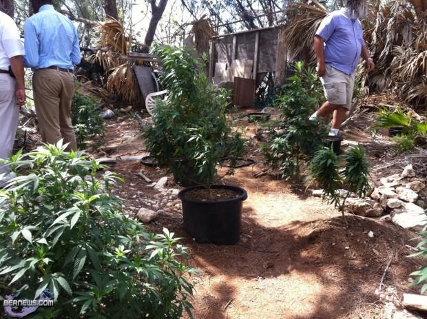 kitchener close cannabis weed police Bermuda July 20 2011 - 5