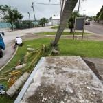 Tiger Bay tree Tropical Storm Maria hurricane weather Bermuda September 15 2011-1-10