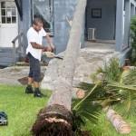 Tiger Bay tree Tropical Storm Maria hurricane weather Bermuda September 15 2011-1-12