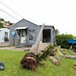 Tiger Bay tree Tropical Storm Maria hurricane weather Bermuda September 15 2011-1