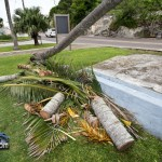 Tiger Bay tree Tropical Storm Maria hurricane weather Bermuda September 15 2011-1-6