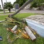 Tiger Bay tree Tropical Storm Maria hurricane weather Bermuda September 15 2011-1-6