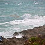 Tropical Storm Maria hurricane weather Bermuda September 15 2011-1