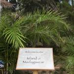 Madagascar Exhibit BAMZ Bermuda November 10 2011-1-14