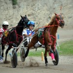 2011 boxing day harness pony racing bermuda (20)