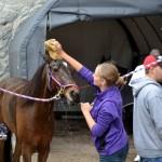 2011 boxing day harness pony racing bermuda (27)