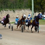 2011 boxing day harness pony racing bermuda (9)