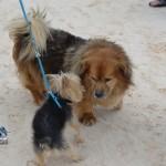 2011 elbow beach bermuda xmas (12)