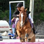 Horse Jumping Bermuda January 22 2011-1-32