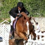 Horse Jumping Bermuda January 22 2011-1-37