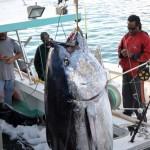 920lb tuna feb 1 2012 (11)