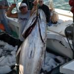 920lb tuna feb 1 2012 (13)