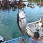 920lb tuna feb 1 2012 (2)