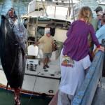 920lb tuna feb 1 2012 (5)