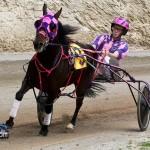 Harness Pony Racing Bermuda February 12 2012-1
