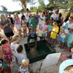 Fripper Turtle Release Clearwater Beach Bermuda August 14 2012 (10)
