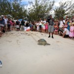 Fripper Turtle Release Clearwater Beach Bermuda August 14 2012 (22)