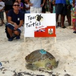 Fripper Turtle Release Clearwater Beach Bermuda August 14 2012 (3)