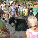 Fripper Turtle Release Clearwater Beach Bermuda August 14 2012 (6)