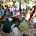 Fripper Turtle Release Clearwater Beach Bermuda August 14 2012 (8)