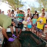 Fripper Turtle Release Clearwater Beach Bermuda August 14 2012 (9)