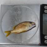 jr fishing aug 2012 (16)