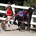 Driving Horse & Pony Club Harness Pony Racing Bermuda, September 29 2012 (12)