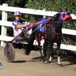 Driving Horse & Pony Club Harness Pony Racing Bermuda, September 29 2012 (15)