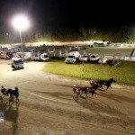 Driving Horse & Pony Club Harness Pony Racing Bermuda, September 29 2012 (20)