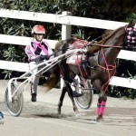 Driving Horse & Pony Club Harness Pony Racing Bermuda, September 29 2012 (5)