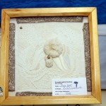 2012 bda needlework show (39)