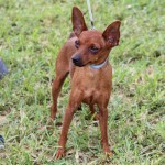 Bermuda Kennel Club Dog Show, October 20 2012-1-17