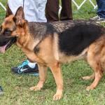 Bermuda Kennel Club Dog Show, October 20 2012-1-19