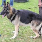 Bermuda Kennel Club Dog Show, October 20 2012-1-26