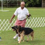 Bermuda Kennel Club Dog Show, October 20 2012-1-28