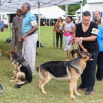 Bermuda Kennel Club Dog Show, October 20 2012-1-30