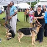 Bermuda Kennel Club Dog Show, October 20 2012-1-30