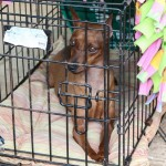 Bermuda Kennel Club Dog Show, October 20 2012-1-43
