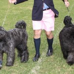 Bermuda Kennel Club Dog Show, October 20 2012-1-9